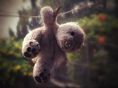 teddy-bear-660498__180